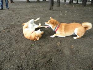ヤマト&ケン④