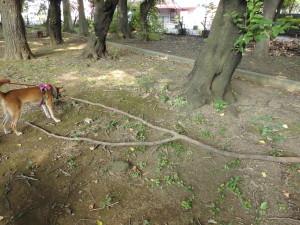 大枝に挑むケン
