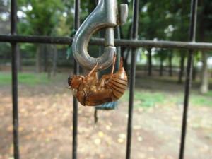 蝉の抜け殻