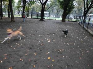 ソラと走るケン