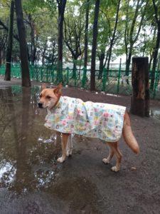 雨散歩のお約束