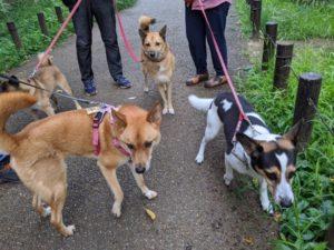 友達と散歩
