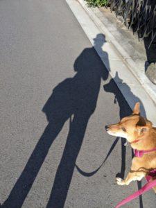 秋晴れ散歩